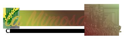 Mimosa Bolgheri